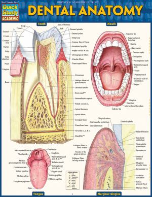 Dental Anatomy (SKU 10406267143)